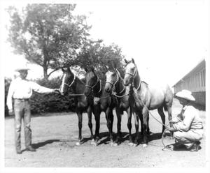 Primary view of object titled 'Four Quarter Horses at Waggoner Ranch'.