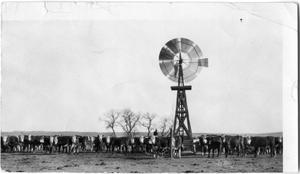 Primary view of object titled 'Herd of Cattle under a Wooden Windmill'.