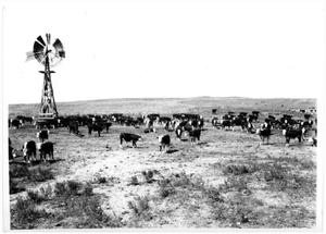 Primary view of object titled 'Cattle Grazing near a Large Wooden  Windmill'.