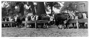 Primary view of object titled 'Cattle Feeders at SMS Ranch'.