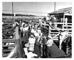 Primary view of object titled 'Cowboys in the Stockyards'.