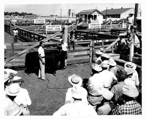 Primary view of object titled 'Sale of Angus Steer at the Stockyards, 1957'.
