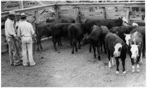 Primary view of object titled 'Cattle in a Pen'.