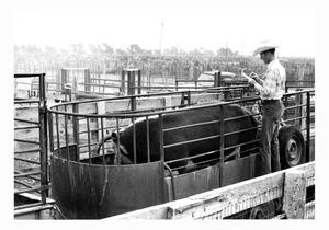 Primary view of object titled 'Market Inspection at the Stockyards'.