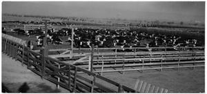 Primary view of object titled 'Cattle Corral at the Stockyards'.
