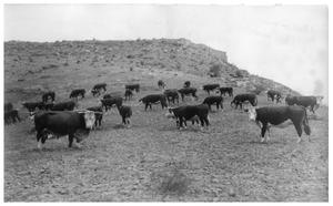 Primary view of object titled 'Ranching in West Texas'.