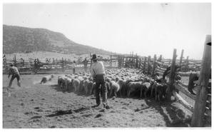 Primary view of object titled 'Sheep on a Ranch in West Texas'.