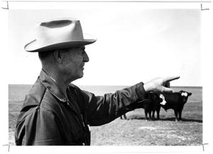 Henry Fields with Cattle