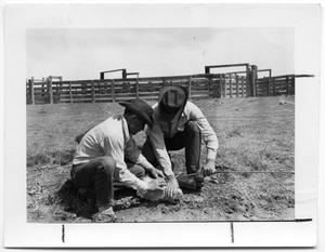Primary view of object titled 'Cowboys and Calf'.