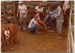 Primary view of object titled 'Cowboys Injecting Cattle'.
