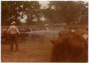 Primary view of object titled 'Cowboy Spraying Cattle'.