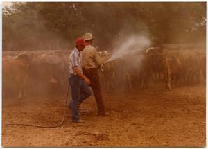 Primary view of object titled 'Two Cowboys Spraying Cattle'.