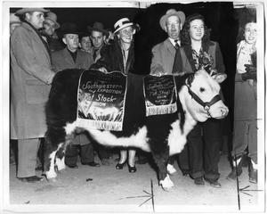Primary view of object titled 'Grand Champion Hereford Steer, Fort Worth 1947'.