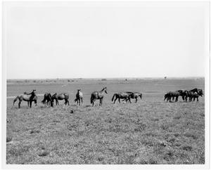 Primary view of object titled 'Horses in a Grassy Field'.