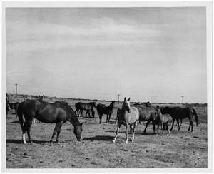 Primary view of object titled 'Herd of Horses'.