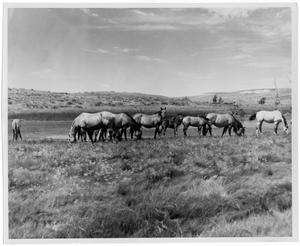 Primary view of object titled 'Horses Grazing in a Grassy Field'.