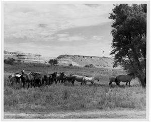 Primary view of object titled 'Horses in Grassy Field'.