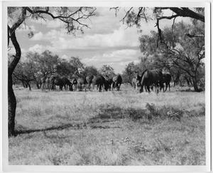 Primary view of object titled 'Mares and Colts Grazing in a Field'.