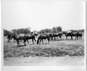 Primary view of object titled 'Horses Eating in a Field'.