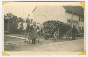 Primary view of object titled '[Woman with Cow-Drawn Wagon]'.