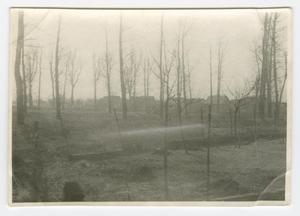 Primary view of object titled '[Copse of Barren Trees]'.