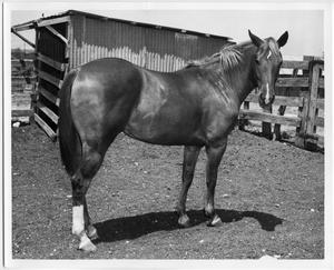 Primary view of object titled 'Horse in a Corral'.