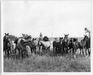 Primary view of object titled 'Horses at Johnson Ranch'.