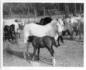 Primary view of object titled 'Mare and Nursing Foal'.