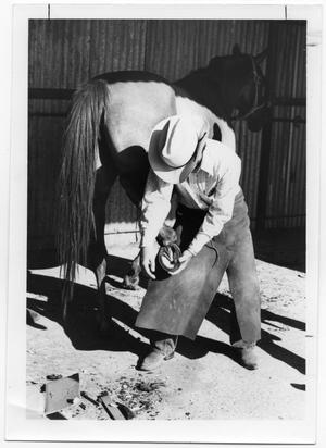 Cowboy Shoeing a Horse
