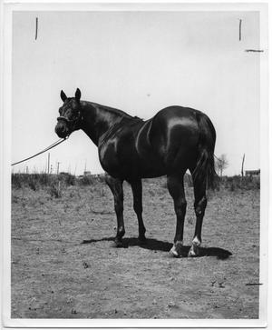 Primary view of object titled 'Claude the Stallion'.