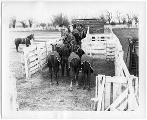 Primary view of object titled 'Herding Horses in a Trailer'.