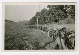 Primary view of object titled '[German Soldiers Travelling with Horses]'.
