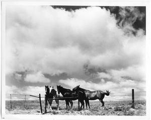 Primary view of object titled 'Four Horses'.