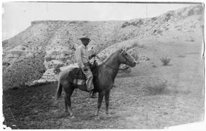Primary view of object titled '[Photograph of Sappo the Palomino]'.