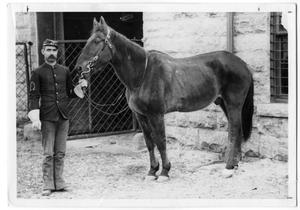Primary view of object titled 'Soldier with Horse at Fort Riley'.