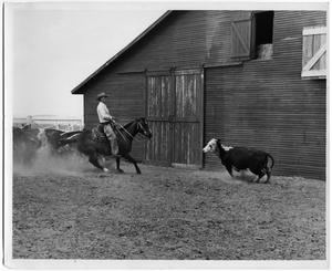 Primary view of object titled 'H. Calhoun on Horse'.