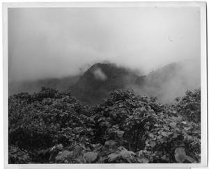 Primary view of object titled '[Photograph of Rainy Jungle and Mountains in Mexico]'.