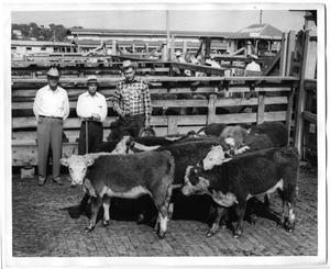 Primary view of object titled 'Champion Hereford Heifers, Ft. Worth Sale'.