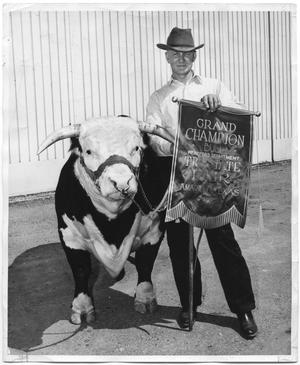 Primary view of object titled 'Grand Champion Bull, Tri State Fair, Amarillo, Texas'.