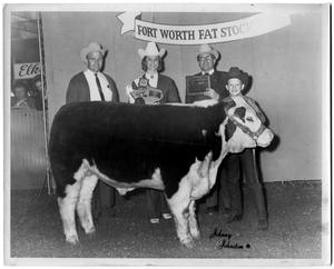 Primary view of object titled 'Champion Polled Hereford Steer, Jr. Show'.