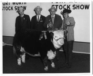 Primary view of object titled 'Miss Bocal Lass W 128, Champion Hereford Female'.