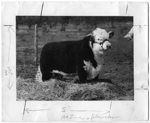 Primary view of object titled 'Bull with Harness'.