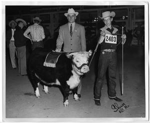 Primary view of object titled 'Champion Hereford Female, Junior Division 1955 HFSS'.