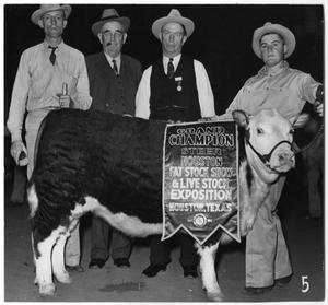 Primary view of object titled 'Grand Champion Beef Calf of 1944 Houston Stock Show'.