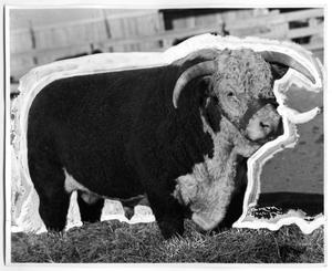 Primary view of object titled 'Hereford Steer'.