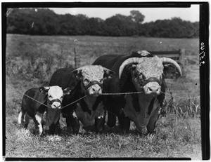 Primary view of object titled '3 Bull Group'.