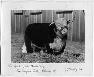 Primary view of object titled 'Res. Champion Bull, Odessa 1948'.