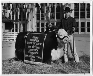 Primary view of object titled 'Grand Champion Steer of Show, San Antonio, Texas, 1960'.