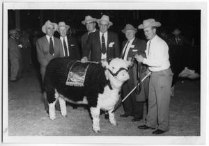 Primary view of object titled 'National Polled Hereford Show, 1959'.