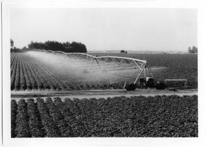 Primary view of object titled 'Irrigation Sprinklers Over Crops'.